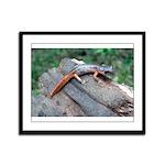 Ensatina Salamander Framed Panel Print