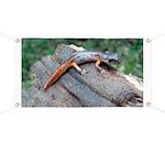 Ensatina Salamander Banner