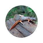 Ensatina Salamander 3.5