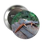 """Ensatina Salamander 2.25"""" Button"""