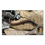 California Slender Salamander Rectangle Sticker