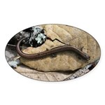 California Slender Salamander Oval Sticker