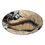 California Slender Salamander Oval Sticker (10 pk)