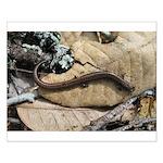 California Slender Salamander Small Poster