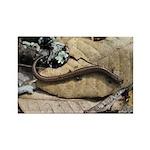 California Slender Salamander Rectangle Magnet (10
