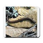 California Slender Salamander Mousepad