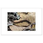 California Slender Salamander Large Poster
