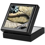 California Slender Salamander Keepsake Box