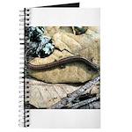 California Slender Salamander Journal