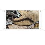 California Slender Salamander Banner
