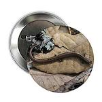California Slender Salamander 2.25