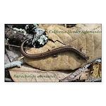 Calif. Slender Salamander Rectangle Sticker