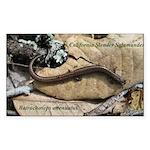 Calif. Slender Salamander Rectangle Sticker 10 pk