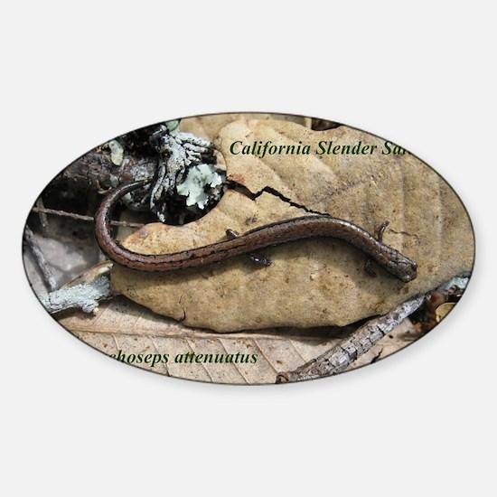 Calif. Slender Salamander Oval Decal