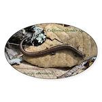 Calif. Slender Salamander Oval Sticker