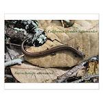 Calif. Slender Salamander Small Poster