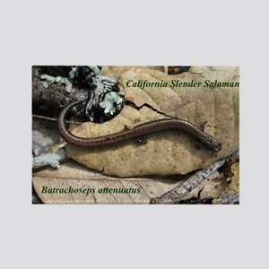 Calif. Slender Salamander Rectangle Magnet