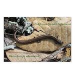 Calif. Slender Salamander Postcards (Package of 8)