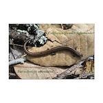 Calif. Slender Salamander Mini Poster Print