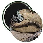 Calif. Slender Salamander Magnet