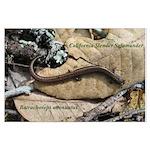 Calif. Slender Salamander Large Poster