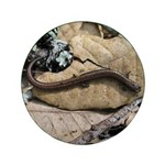 Calif. Slender Salamander 3.5