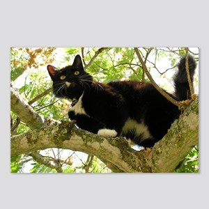 black cat in a tree Postcards (Package of 8)