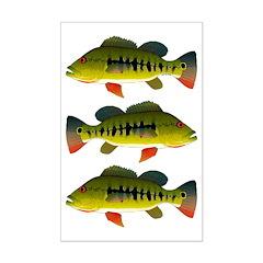 Royal Peacock Bass Posters