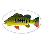 Royal Peacock Bass Sticker