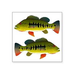 Royal Peacock Bass Sticker