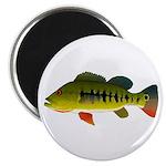Royal Peacock Bass Magnets