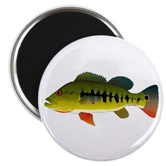 Royal Peacock Bass Magnets