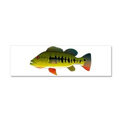 Royal Peacock Bass Car Magnet 10 x 3