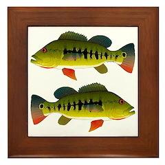 Royal Peacock Bass Framed Tile