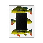 Royal Peacock Bass Picture Frame