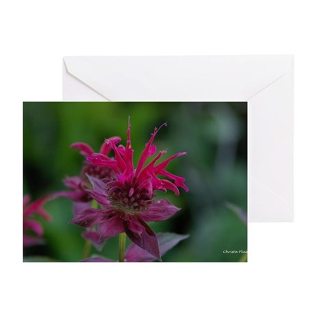 Bee Balm Blank Greeting Cards (Pk of 10)