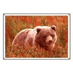 Grizzly Bear Cub in Fireweed Banner