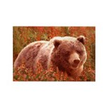 Grizzly Bear Cub in Fi Rectangle Magnet (100 pack)