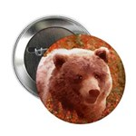Grizzly Bear Cub in Firewe 2.25