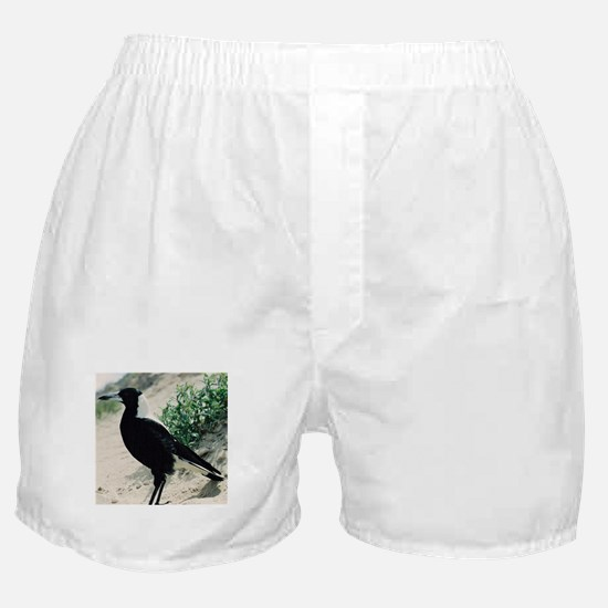Australian Magpie on Beach Boxer Shorts