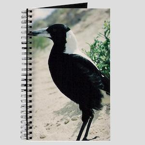 Australian Magpie on Beach Journal