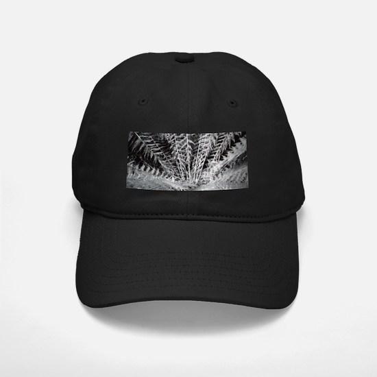 Silver Fern in the Otways Baseball Hat