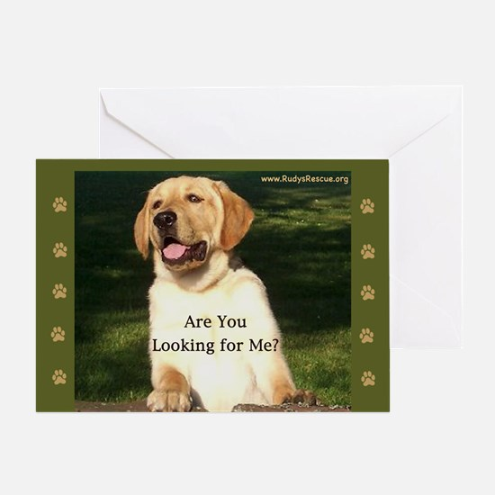 Looking for Me Lab Greeting Card