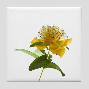 Yellow Hypericum Tile Coaster