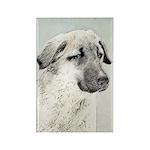 Anatolian Shepherd Rectangle Magnet (100 pack)