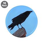 Raven 3.5