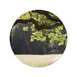 Sunny Oak 3.5