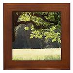 Sunny Oak Framed Tile
