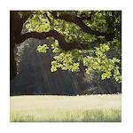 Sunny Oak Tile Coaster