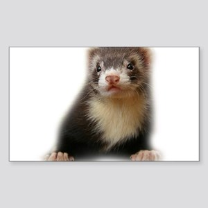 Young Ferret Rectangle Sticker